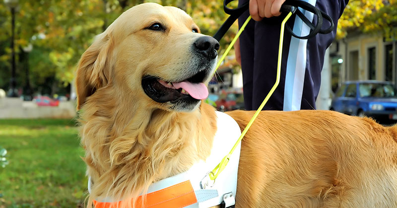 Service Dogs In The Restaurant: Justice Department's Rules on Service Animals Become Increasingly Strict