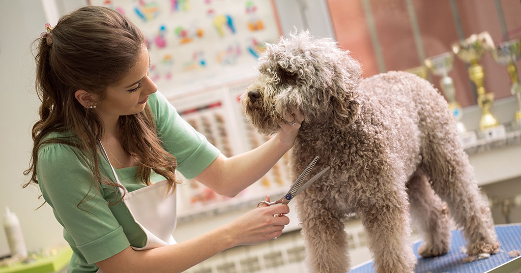 5 Steps to Take Before Investing in a Pet Franchise