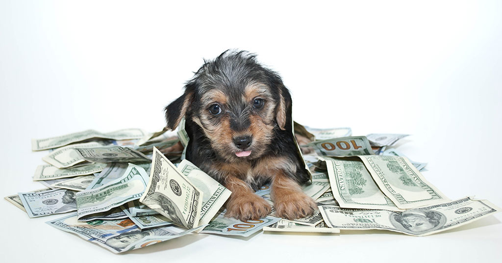 How Much Should You Invest in a Pet Franchise?